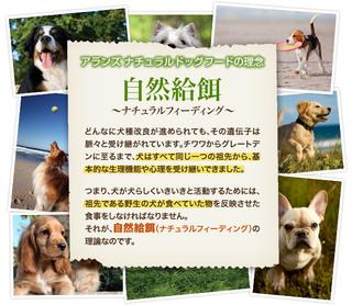 dogfood1.jpg
